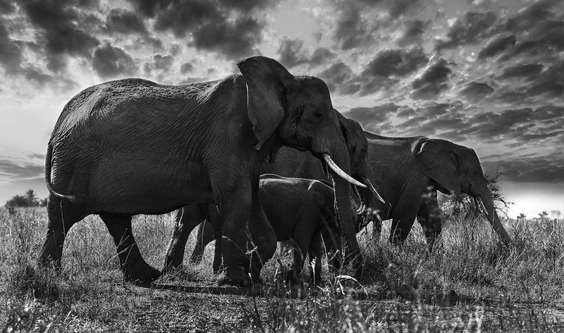 Elephants at the Tarangire national park.  Tanzania, 2019.