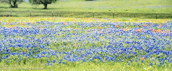Brenham Wildflowers & Flowers