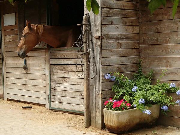 Tuscany by Horse