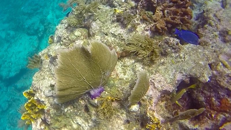 Ciesla-GOPR7482 - KC Coral 2.jpg