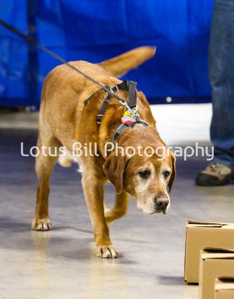 Labrador 1 OH