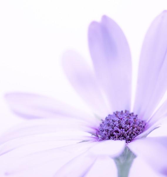 purple flower 3.jpg