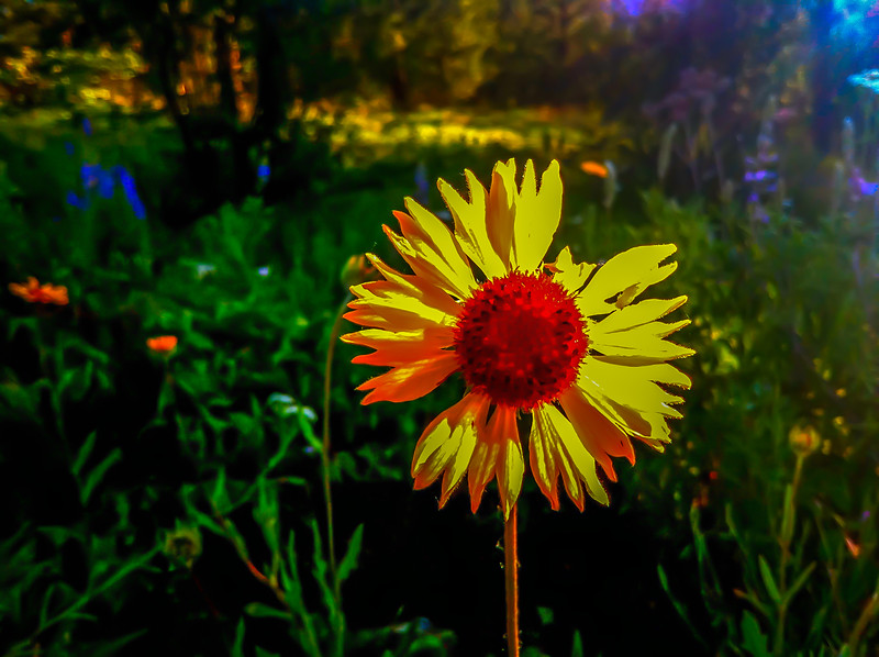 iPhone Photography, Liberty Lake, Washington