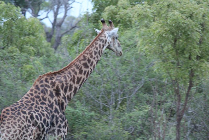 Africa Trip 2012 326.jpg