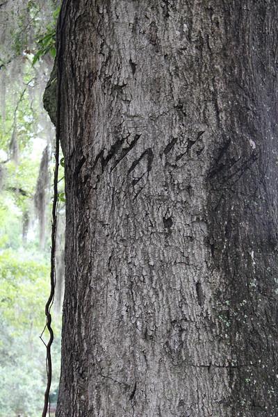 FMR_Savannah_20110715_035.JPG