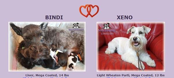 Bindi & Xeno Puppies, DOB 9/15/2020