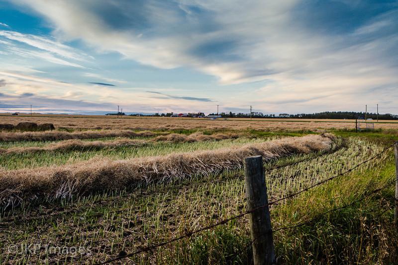 Countryside scenes, near Leduc AB