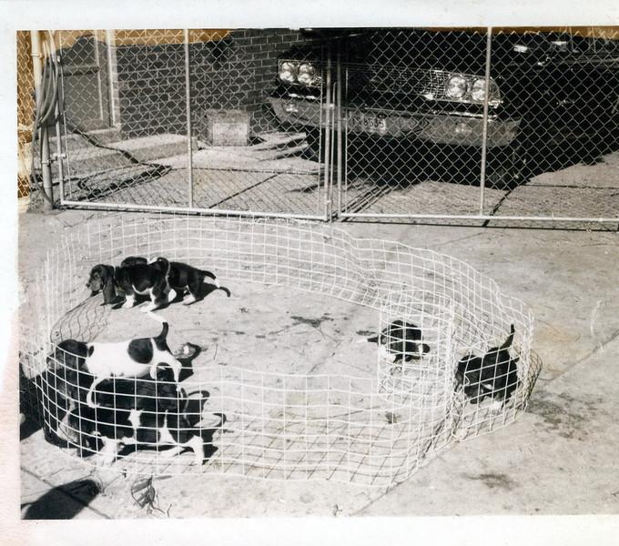 1964 Josephine's puppies (1).jpeg