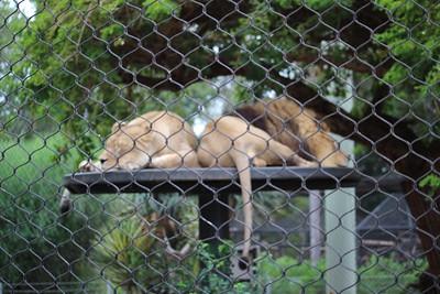 SD Zoo 2017-09-21