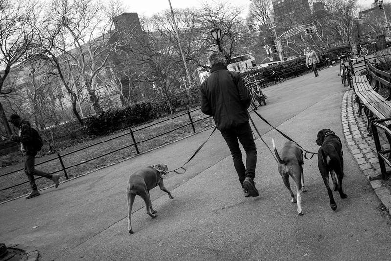 Dog Walker bw-2918.jpg