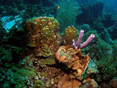 Curacao Scuba Rediho, Blue Cave, Mushroom Forest, Santa Cruz, Paradise w/ Ocean Encounters West