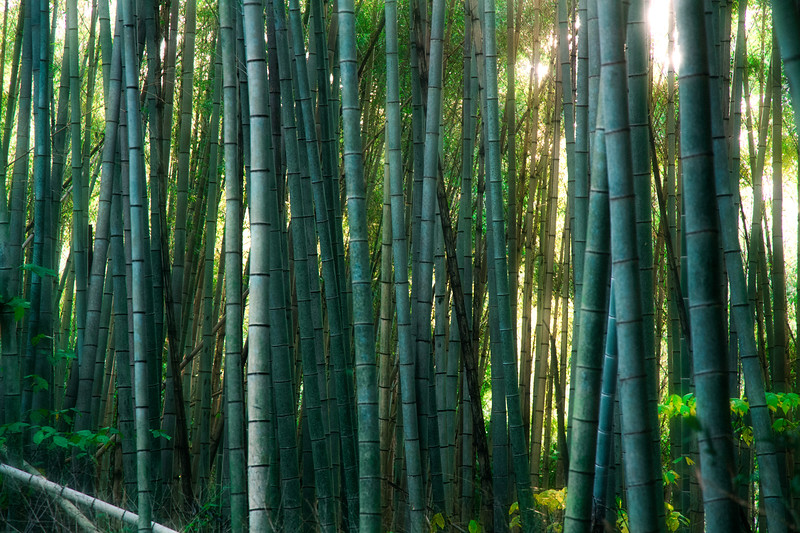 Bamboo Explosion
