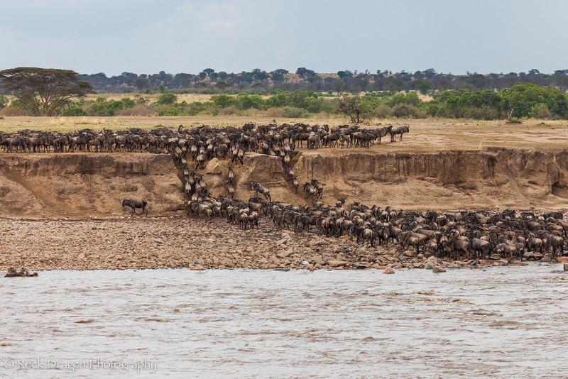 North_Serengeti-34.jpg