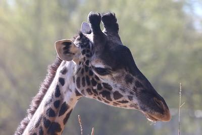 2021 Phoenix Zoo on New Years Day 1-1-2021