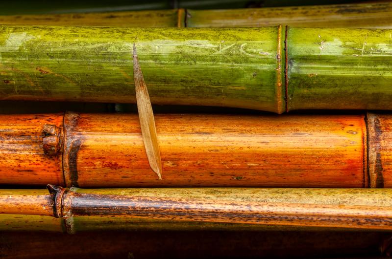 Bamboo 1, Hakone Garden, Saratoga, California, 2010
