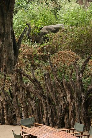 East Africa, Serengeti and Zanzibar - Lake Manyara Tree Lodge - Day 3