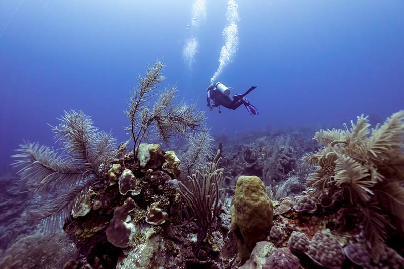Scuba diver underwater, Belize