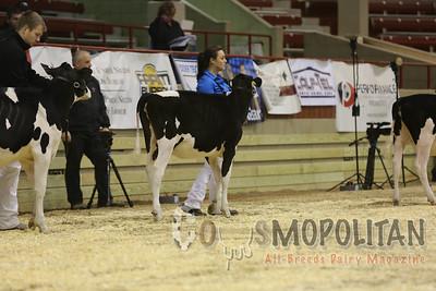 NY Spring Holstein Heifers2016