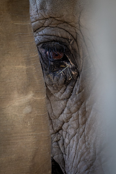 Hidden Elephant