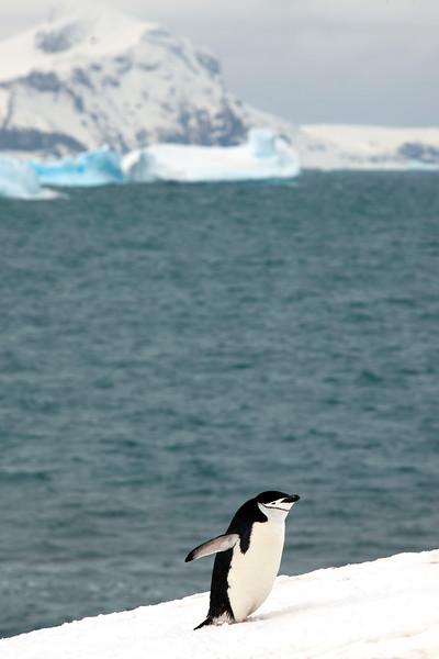 091204_penguin_island_8242.jpg