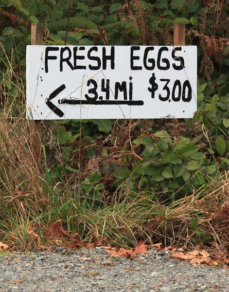 Eggs may be cheaper in the country but finding them can be a challenge. WA