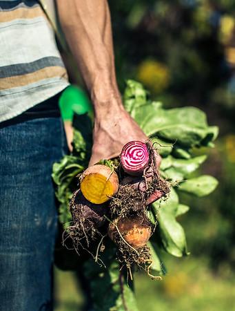 Wegmans Organic