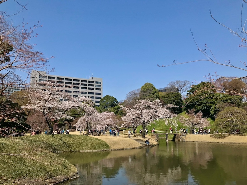 A view of the cherry trees at Koishikawa Korakuen.