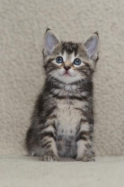 Abel kitties-5.jpg