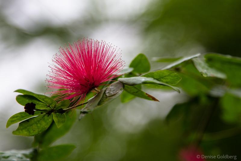 spiky flowers, tropical