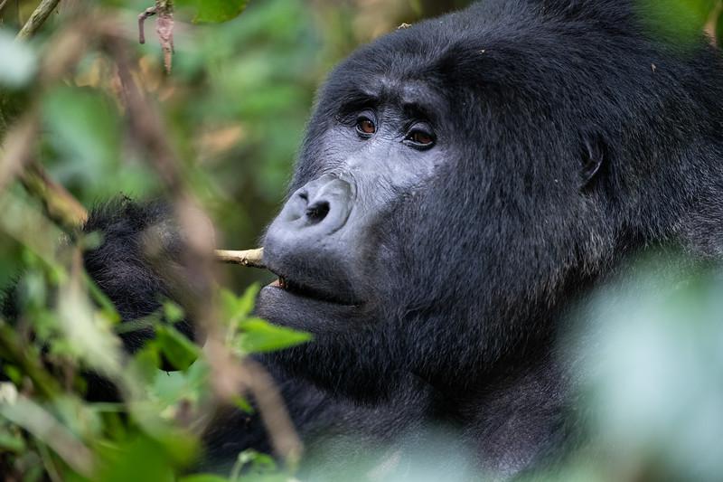 Uganda_T_Gor-1829.jpg
