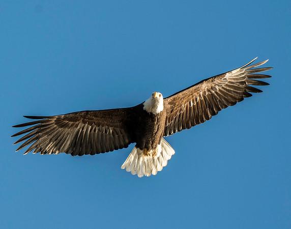 Whidbey Island Birds 1/12/2017