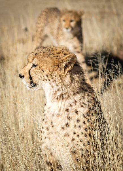 201706_AFRICA-350.jpg