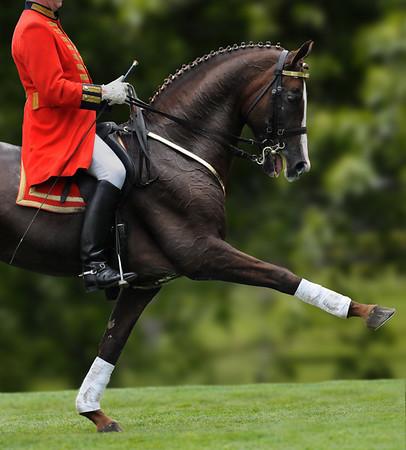 Equine Sport