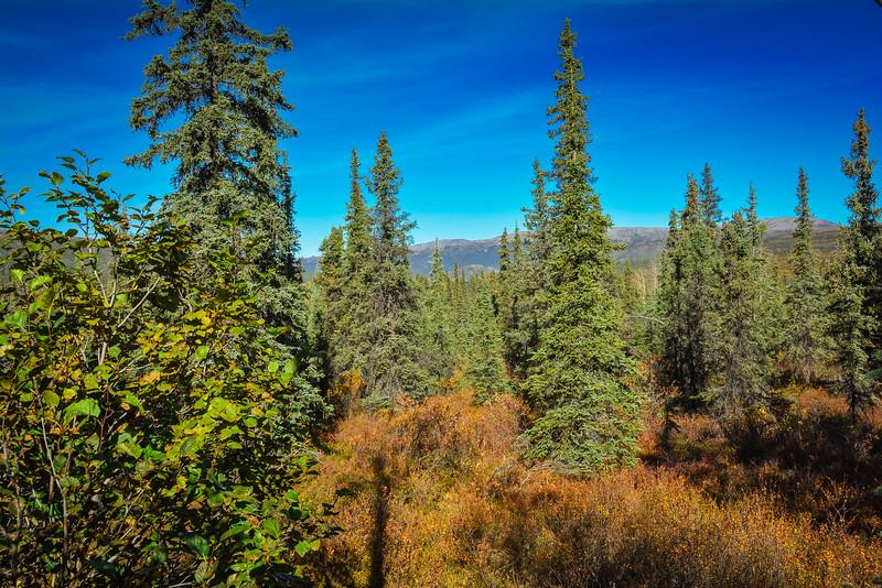 Denali-National-Park-120.jpg