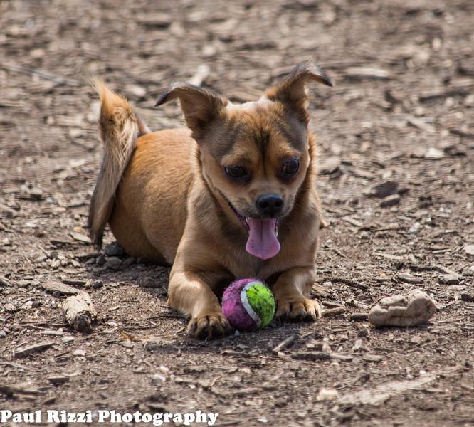 DogPark-9681.jpg