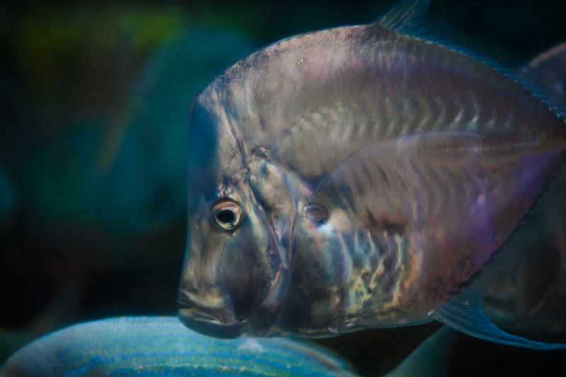 2014 10 25 Dallas World Aquarium-57.jpg