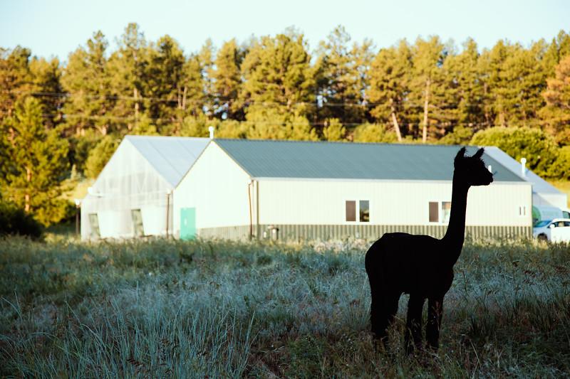 Mountain-Man-Micro-Farms-Alpaca-Silhouette.JPG