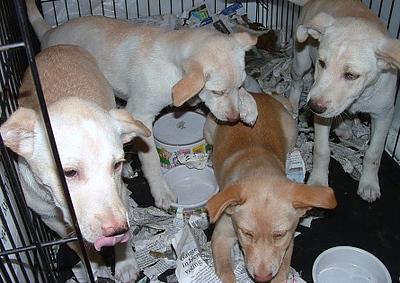 puppies at shelter.jpg