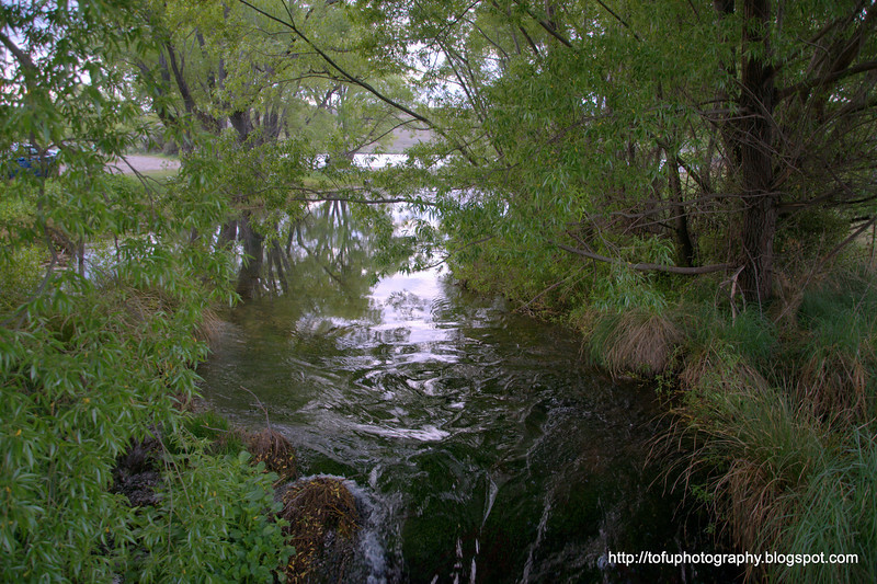 A pretty stream flowing into  Lake Alexandrina in New Zealand in November 2010