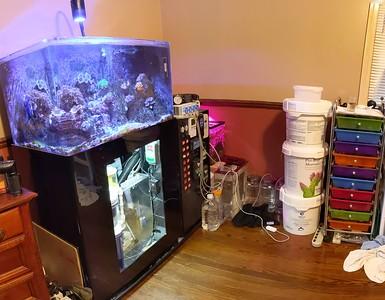 2019-04-20 - Reef Tank Update
