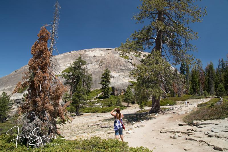 Yosemite 2018 -47.jpg