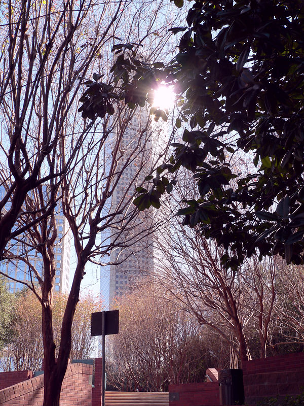 Chase Tower through the trees.jpg