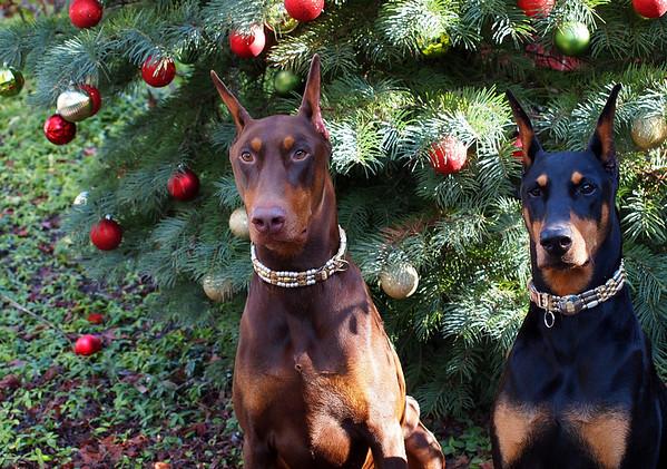 2012 Christmas - DJ & Rosie