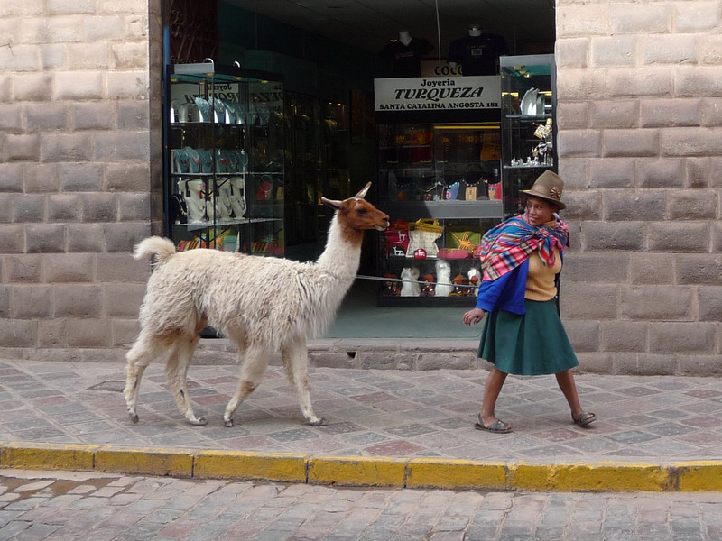 Typical street sight.  Fantastic Cusco - cobbled streets and llamas.