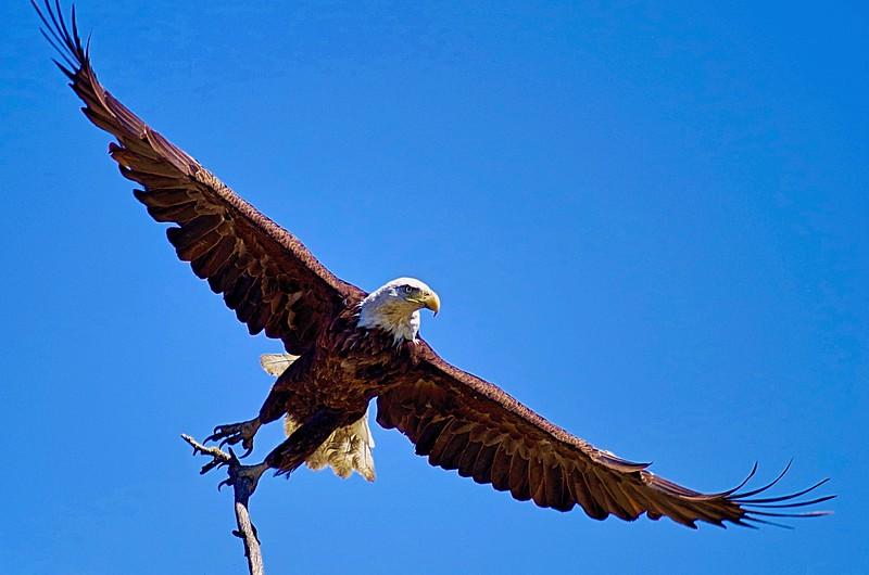 Wingspan copy.jpg
