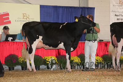 Big E - Holstein Cows 2015