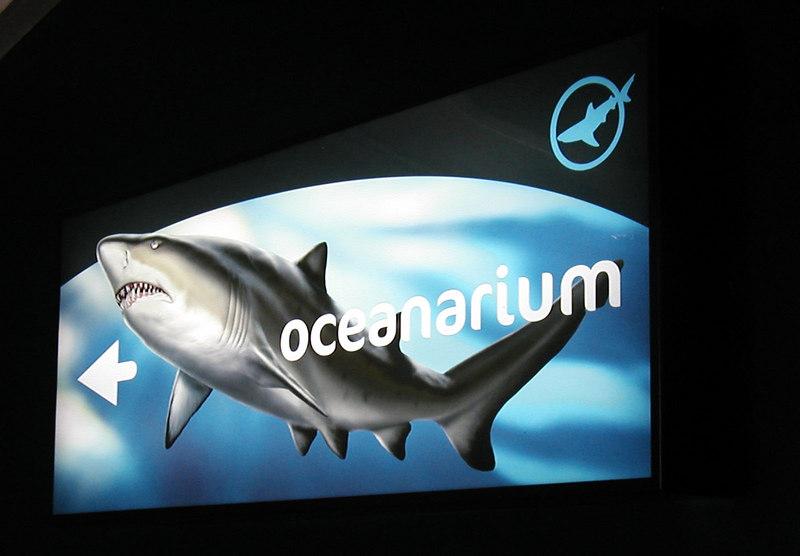 41.  Sydney Aquarium.JPG