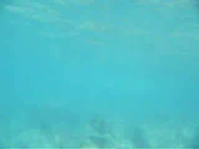 Underwater videos while snorkeling