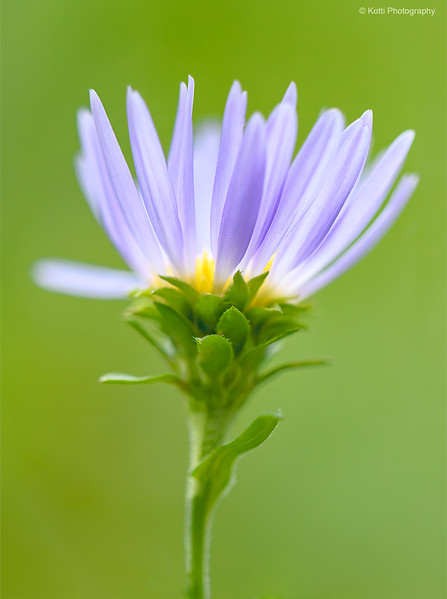 The Glow of  WildFlower