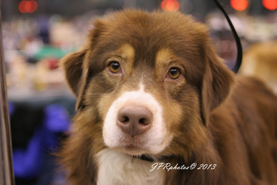 Dog Show 2005